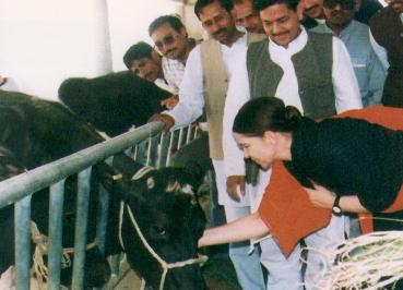 La Princesa Irene acariciando una vaca en la India
